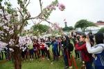Lễ hội hoa anh đào 2017 ở Hà Nội có gì đặc biệt?