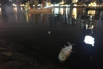 cá chết ở hồ hoàng cầu
