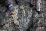 Phát hiện dấu chân khủng long ăn thịt cách đây 80 triệu năm