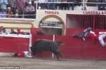 Bò tót nổi điên húc văng đấu sĩ và khán giả