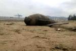 Phát hiện 2 xác cá heo dạt vào bờ biển Thanh Hóa