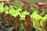 Độc đáo mô hình trồng rau từ rác ngay tại nhà