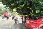 Ảnh: Biển báo giao thông 'ẩn nấp', thách đố người đi đường ở Thủ đô