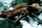 Chuyện đau lòng về 7 nạn nhân của lời nguyền xác ướp Otzi
