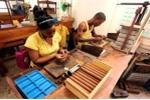 Bí mật cigar Cuba qua con mắt người 'trong cuộc'