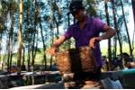Người dân 'méo mặt' vì muốn nuôi ong phải đóng phí bảo vệ