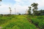 Được chi 53 tỷ đồng để cắt cỏ, cây cối ở đại lộ Thăng Long vẫn um tùm
