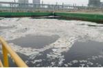 Sự cố Formosa xả chất độc: 'Phải quy trách nhiệm cá nhân, tổ chức liên quan'