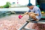 Nuôi cá cạnh ống xả nhà máy giấy Lee&Man: Cán bộ ăn trước để dân tin