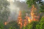 Điều tra vụ cháy rừng phòng hộ chủ trương làm 'siêu' nghĩa trang ở Vĩnh Phúc
