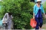Lạnh người cảnh dân bẻ rào chắn đường ray tàu hỏa để đổ rác, trồng rau ở TP.HCM