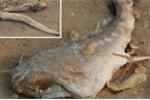 Công bố nguyên nhân cá chết ở miền Trung vào ngày 30/6