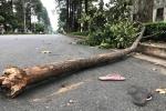 Bị cành cây rơi trúng người, nữ công nhân chết thương tâm