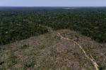 Những bức ảnh ấn tượng về cuộc chiến giữ rừng Amazon ở Brazil