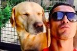 Ronaldo ra tay nghĩa hiệp, hơn 80 chú chó vô gia cư được cứu nguy