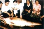 Lên đời 'đại gia' từ cá Sủ vàng tiền tỷ