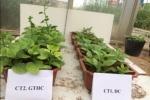 Biến phế, phụ phẩm trồng nấm làm giá thể hữu cơ trồng rau sạch