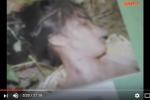 Hành trình bắt kẻ sát nhân máu lạnh 1 tuần giết hiếp hai cô gái, cướp tài sản