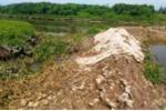 Rừng ngập mặn dọc sông Mơ bị chặt phá.