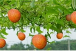 Sản phẩm nguồn gốc thảo dược - Sự chuyển hướng trong ngành đồ uống