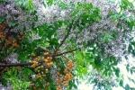 Điểm mặt những loại cây quen thuộc lỡ 'nhấm' vào là tắc thở