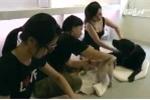 Dịch vụ mát-xa cho chó đắt khách ở Đài Loan