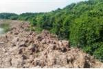 Dân mặc sức đắp đập, be bờ vùng rừng ngập mặn thành ao, hồ nuôi tôm.