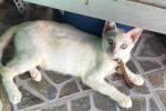 Video: Nghị lực phi thường của chú mèo tưởng như đã chết