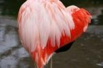 Ngỡ ngàng lời tỏ tình Valentine trên cánh hồng hạc