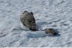 'Xác ướp trở lại' trên đỉnh núi sau vụ tuyết lở
