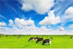 Vinamilk ra mắt dòng sản phẩm sữa tươi organic cao cấp