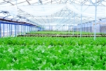 Vingroup ký thỏa thuận hợp tác với 500 hộ sản xuất