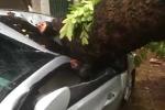 Hà Nội: Cây cổ thụ bật gốc đè bẹp ôtô, cây cối đổ la liệt đường