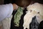 Cận cảnh chú chó con màu xanh lá cực hiếm trên thế giới