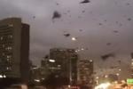 Chim tấn công thành phố tạo khung cảnh rùng rợn như 'ngày tận thế' ở Mỹ