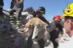 Video: Chú chó sống sót thần kỳ sau 9 ngày bị vùi trong đống đổ nát vì động đất ở Italia