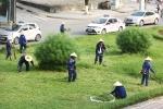 Ảnh: Công nhân cắt cỏ Thủ đô trở lại làm việc sau 3 tháng nghỉ việc