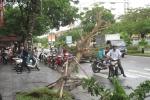 Cây xanh ở Huế bị gió quật đổ nghiêng ngả trong bão số 4
