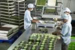 Uy tín của Vingroup sẽ tạo niềm tin cho nông sản sạch