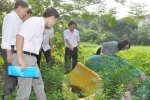 Hà Nội chủ động phòng chống dịch Zika