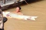 Clip: Ngư dân bắt được cá hô vàng trăm cân, dài 1,5 mét giá hơn 300 triệu