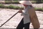 Video: Cách chống nóng cực kỳ hiệu quả của người nông dân