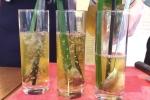 Cách nấu trà lá dứa thanh lọc, giải độc hiệu quả