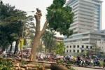 Công an HN có đề nghị kỷ luật cán bộ trả lời báo chí vụ chặt cây?