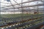 Hệ thống tự động hóa trong các nhà trồng thông minh