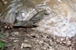 Đụng độ lươn điện, sát thủ đầm lầy bị giật chết thảm