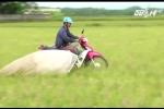 Độc đáo nghề chạy xe máy săn cào cào, kiếm tiền triệu mỗi ngày ở Hà Tĩnh