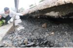 Đường Hồ Chí Minh hở hàm ếch, sụt lún khủng khiếp