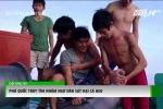 Truy tìm nhóm thanh niên sát hại cá heo ở Phú Quốc