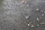 Cá nổi đen kịt kênh Nhiêu Lộc, ngoi ngóp thở trong rác thải